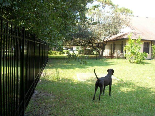 Dog Fence 1