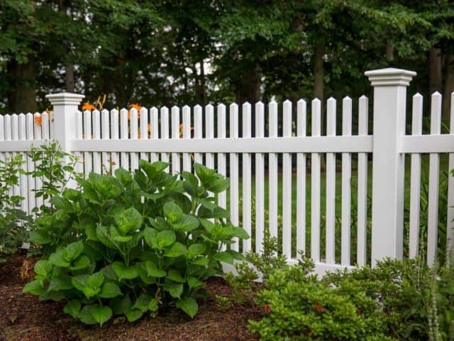 Dog Fence 3