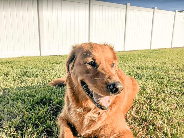 dog-fence-main