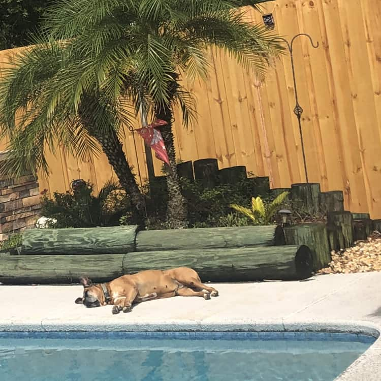 Jacksonville Fences for your dog and pool