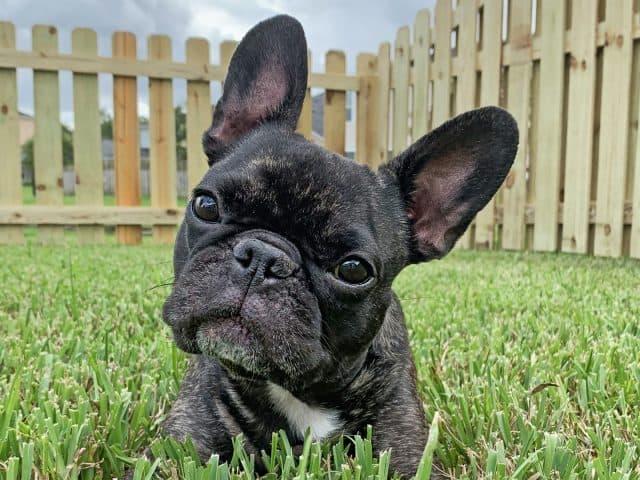 https://www.superiorfenceandrail.com/wp-content/uploads/2021/04/Richmond-Fence-Company-Dog-Fences-dog-ear-fences-640x480.jpg